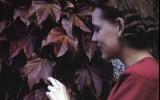 leavesR.jpg